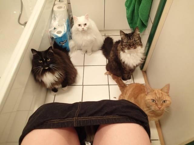 Toilet_cat.thumb.jpg.0677b2c615eba2ae366ce3279e91f9fe.jpg