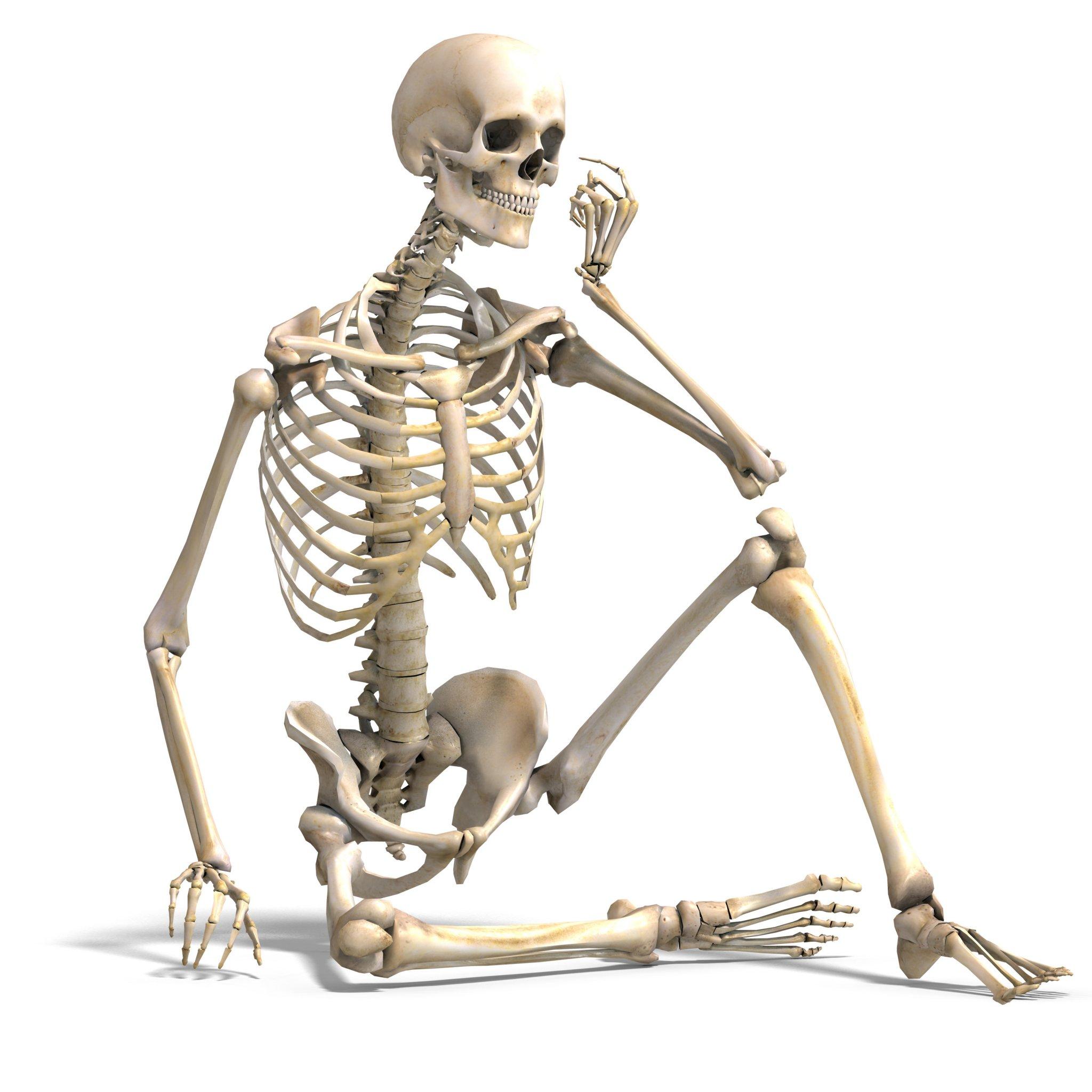 MaleSkeletonsitting1.thumb.jpg.8a1dd326eaff93349e5bda5a06b379f8.jpg