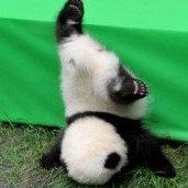 Bad_Sad_Panda